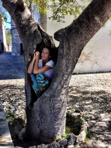 bild träd